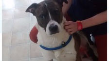 """Woody was """"frightened"""" and suffering from a broken leg when he was first discovered."""
