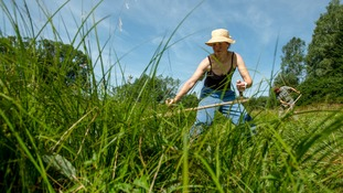Ticks are commonly found in long grass.