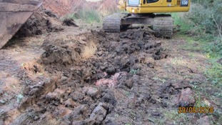 10,000 chicken carcasses were found at a farm near Newark.