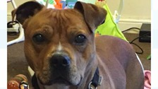 Jax was left with severe burns after he was doused with a substance through fence panels.