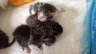 Newborn kittens dumped in carrier bag and left to die