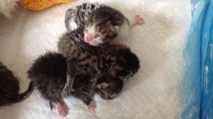 The kittens were found in Abercynon