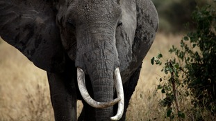 Wayne Lotter campaigned to protect Tanzania's elephants.