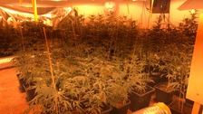 Police uncovered a cannabis farm with plants valued in excess of £60,000