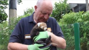 Keeper holding Panda
