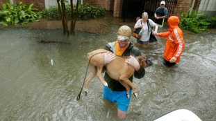 Thousands have been forced to leave their flooded homes with only their pets and limited possessions.