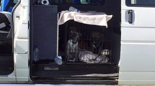 The dogs were left in a cage in the van for four hours.