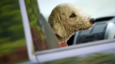 Pets can easily overheat in cars during the warm weather.