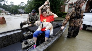Tina Cross and her dog Mitzy are evacuated from Spring, Texas.