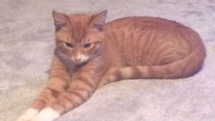 Rusty the cat was dismembered and left on the owner's doorstep.