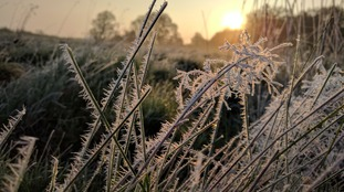 Frost on the grass at sunrise at the beginning of summer