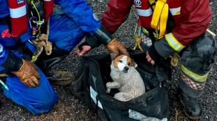 Dog rescued from 80-foot Cornish mineshaft