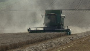 Farmers say erratic summer weather could drive up cost of harvesting