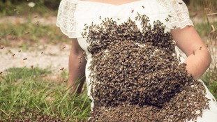 A swarm of bees on Emily Mueller's baby bump.
