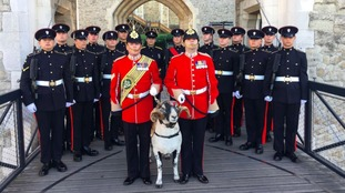 Regimental mascot ram dies on eve of parade