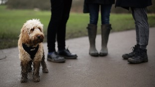 Dog walkers told to carry at least two waste bags - or face an £80 fine