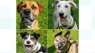 Quirky-looking canines need a new home