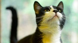 Can you help this heartbroken cat?