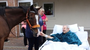 Hospice arranges horse visit for patient