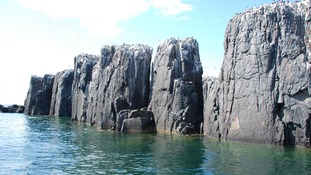 Designated feeding waters at Farne Islands.