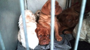 More than 250 illegal puppies discovered travelling through Cairnryan Port
