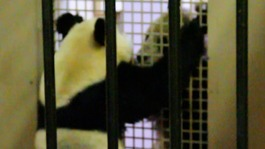 Yang Guang and Tian Tian in the 'love tunnel'