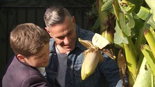 Jason Hedges and his banana tree that's finally given him his first crop after twenty years