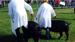 Royal Berkshire Show