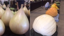 Record entries for Harrogate's giant vegetable contest