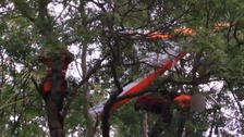 Hang glider pilot hangs from treetops after first lesson