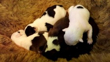 Newborn puppies left out with bins on collection day