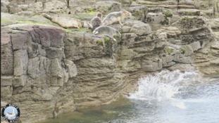 'Distressed' seals flee humans at beauty spot