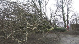 A tree had to be felled by tree surgeons after it threatened the safety of monkeys during Novembers floods.