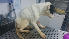 Pair banned from owning pets after dog starved to death