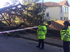 TRAVEL: ROAD CLOSURE - Fallen tree - crushed cars - Southampton
