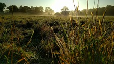 Sunrise over a field of dew
