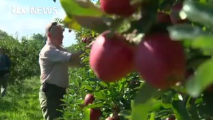 Thousands of apples go to waste after poor harvest