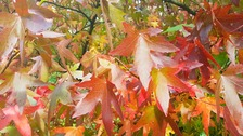 Autumn leave TRACEY LAING