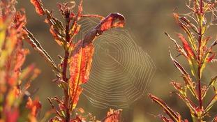 Autumn leave and cobweb