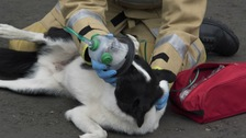 An example of an animal friendly oxygen mask