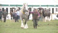 The Bakewell Show 2018 has been 'closed due to bad weather.'