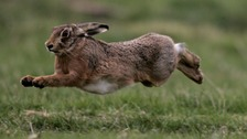 Two men are reported to have been hunting hares with dogs