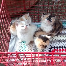 The four kittens found dumped in Essex