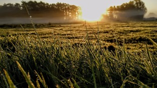 Morning dew on the grass during sunrise