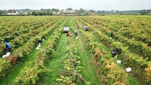 Corner of Essex that's becoming one of the country's finest wine producing areas