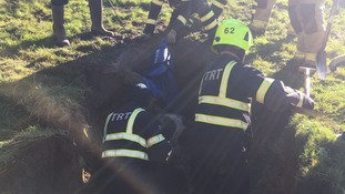 The cow got its back leg stuck during the incident on Thursday.