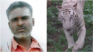 Zoo caretaker mauled to death by White Tiger at India's Bannerghatta Biological Park