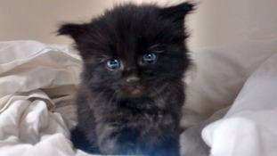Kitten recovering after being rescued from compost heap