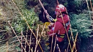 Dog saved after falling 10ft down quarry ledge