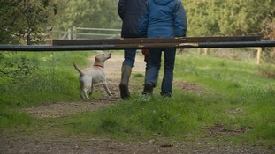 Norfolk villagers pair up for 'buddy' dog walking scheme following horrific killing